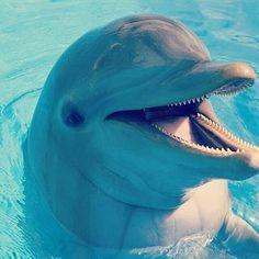 "#dolphinswim #dolphins #dolphin…"""