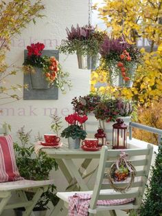 Autumn balcony with Gaultheria, Calluna Twin Girls, Salbei, Cyclamen, Hedera, Muehlenbeckia, Gaultheria, Physalis