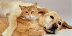 Cat hugging a dog