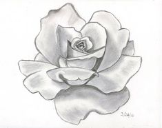 pencil drawings   This is my first attempt at doing a shaded pencil drawing of a rose i ...