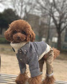 ☃️ . こちらの📷もお気に入り❤️ . #トイプードル #トイプードル男の子 #トイプードルレッド #プードル #ふわもこ部 #犬のいる暮らし #親ばか部 #わんこなしでは生きていけません会  #犬のいる生活 #タイニープードル #ティーカッププードル #可愛い #愛犬 #プードル部 #犬なしでは生きていけない #犬服 #ドッグウェア #犬の洋服#トリミング  #おしゃれわんこ #おしゃれカット #いぬすたぐらむ #toypoodle  #エレdog #アトリエジジ #アトリエgg #Ateliergg #ggmadeintokyo Cute Baby Dogs, Cute Funny Dogs, Cute Dogs And Puppies, Cute Baby Animals, Toy Poodle Puppies, Tea Cup Poodle, Dog Coats, Little Dogs, Pet Clothes