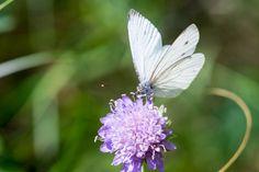https://flic.kr/p/wmk9Gs | Parc National de la Vanoise - 2015