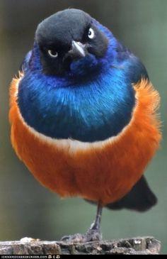 Beautiful angry bird