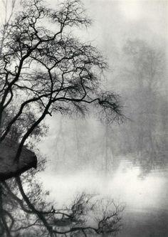 tree art. ethereal