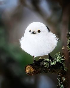 "8,874 Me gusta, 96 comentarios - Amazing Destination (@amazing.destination) en Instagram: ""It's a bird or snowball? #amazingdestination Photo by @soosseli"""