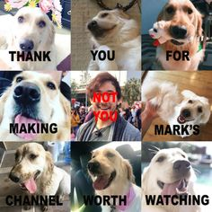 This is hilarious. Poor Mark. I ADORE YOU TOO. I just love Chica more. Puppieeesss