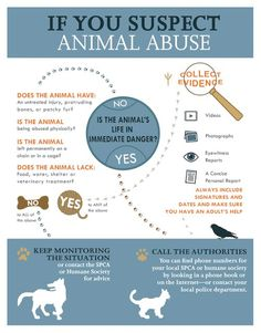 Cinnamon's Blog: Coon Hound Tales: Wordless Wednesday: What to do if you Suspect Animal Abuse