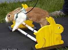 Moving to Britain....training starts Saturday bunny ;)
