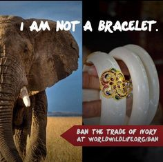 Only elephants should wear ivory.
