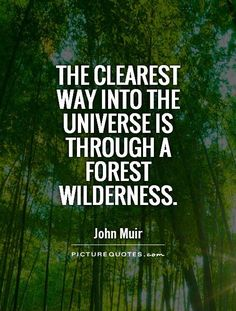 The clearest way into the Universe is through a forest wilderness. Picture Quotes.