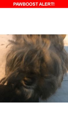 Is this your lost pet? Found in Los Angeles, CA 90001. Please spread the word so we can find the owner!    Nearest Address: Near E 73rd St & Compton Ave