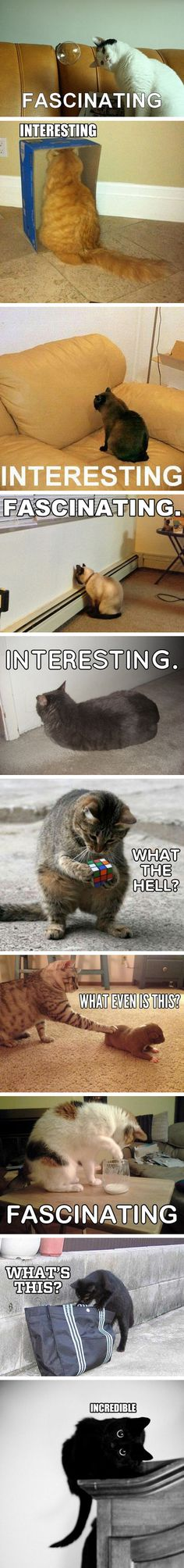 Cats that get easily amazed…I think I'm a cat then