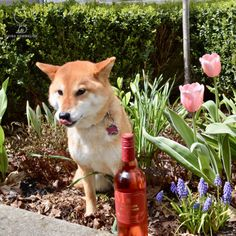 2015 Marqués de Cáceres RosadoEnjoying lovely strawberry-colored... #shiba