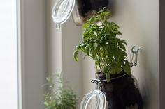 DIY indoor herb garden: step by step instructions - Home Page Diy Herb Garden, Garden Steps, Indoor Garden, Rooms Home Decor, Diy Home Decor, Decor Room, Herbs Indoors, Kraut, Creative Decor