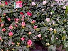 Dublin's Only City Centre Garden Centre Flower Pots, Flowers, Facts, Garden, Flower Vases, Plant Pots, Garten, Lawn And Garden, Gardens
