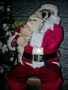 Pug Kiss's for Santa