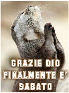 Sabato immagine #1412 - Grazie Dio Finalmente è Sabato - Immagine per Facebook, WhatsApp, Twitter e Pinterest.