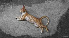 Belchior, o gato