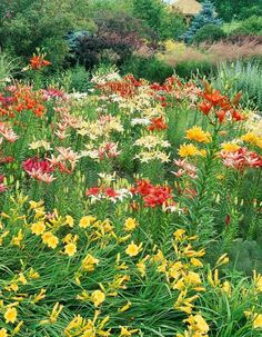 Create a knockout yard with these simple strategies. Mass colors for impact  Cluster several of the same plant variety together for more color clout. If nearby plants will bloom at the same time, check plant tags or references to make sure the colors will complement or contrast, rather than clash. The many layers of this garden include lilies, feather reedgrass and conifers.