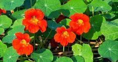 Herbs, Garden, Flowers, Plants, Blog, Decor, Garten, Decoration, Lawn And Garden