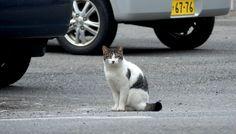 キジトラ白猫(516) 猫写真-横浜 #猫写真