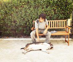 Morning sunbath. #BullTerrier #Bully #Dog #Cute #Kelvin