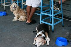 The D.C. area's most dog-friendly bar and restaurant patios - The Washington Post