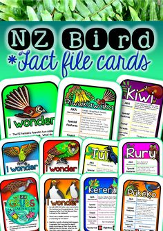 New Zealand Native Bird Fact Files + Task Cards Teaching Materials, Teaching Resources, Classroom Displays, Classroom Ideas, Bird Facts, Alternative Names, Different Birds, Home Schooling, Task Cards