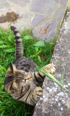 A cat and his blade of grass