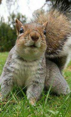 Squirrel - Smile...