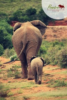 Visit South Africa Giraffe, Elephant, Visit South Africa, Lion Pride, Private Games, Big 5, Game Reserve, Leopards, African Safari