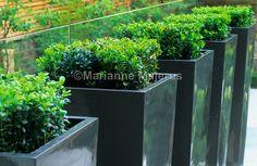 classic garden | Charlotte Rowe Blog