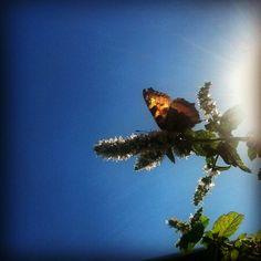 Summer love Summer Of Love, Dandelion, Flowers, Plants, Nature, Dandelions, Plant, Taraxacum Officinale, Royal Icing Flowers