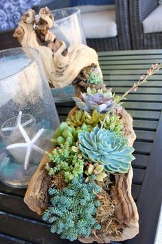 Succulents planted in moss on driftwood