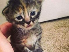 Purrmanently Sad Cat