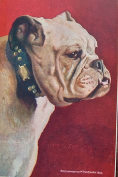 Antique BULLDOG Postcard undivided back 1900 unused