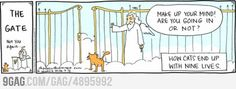 How cats ended up with 9 lives