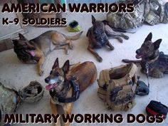 Never forget the Military Working Dogs.many give the ultimate sacrifice in service. Military Working Dogs, Military Dogs, Police Dogs, Malinois Puppies For Sale, Belgian Malinois Puppies, Dog Soldiers, My Champion, War Dogs, Therapy Dogs