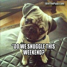 Who is snuggling with their fur friends this weekend?