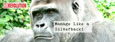 Be a Silverback @HRREV our mission it to offer HR Outsourced services for UK businesses. Real people, providing real HR solutions for businesses with real drive""