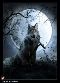 Wolf moon by aycatanrikulu