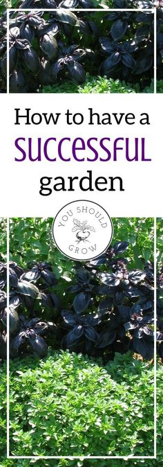 How to have a successful garden. Tips for getting the best results for homegrown food.