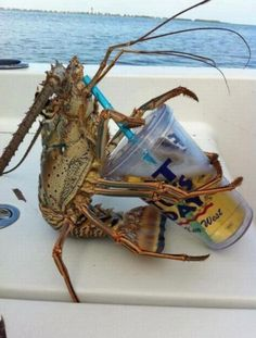 Crustacean Enjoys Thirsty Thursday. He doesn't have a problem, bro, he can stop any time he wants.. Animals