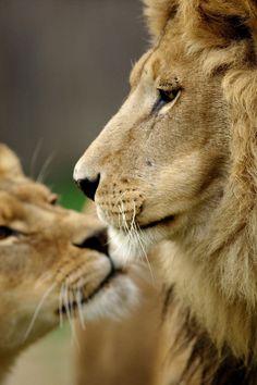 animales que muestran su amor                                                                                                                                                                                 Más