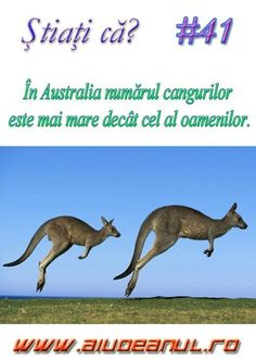 The More You Know, Did You Know, Cultura General, Kangaroo, Portal, Australia, Science, Memes, Funny