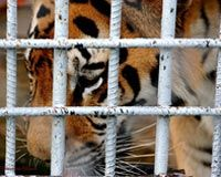 Animal Legal Defense Fund : Tony, the Truck Stop Tiger. An update on ALDF's fight to free Tony from his truckstop nightmare.