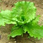 Gardening in A Globally Warmed World...Sue 2013