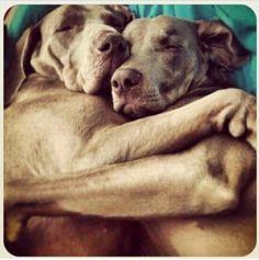 Abrazos!!