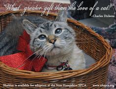 """""""What greater gift than the love of a cat?""""  Adopt and save a life!  Pick your Cat, Pick Your Price! at the New Hampshire SPCA, in Stratham, NH. Now through December 23. For more animals available for adoption visit www.nhspca.org"""