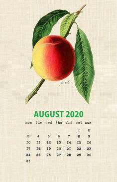 Botanical Fruit 2020 Calendar Printable Templates culinary Fruits Monthly Planner In botany Aggregate fruit Ovary Latest Designs 12 Months Yearly One Page Free Printable Calendar Templates, Printable Calendar 2020, Monthly Calendar Template, Printables, December Calendar, 2019 Calendar, Vintage Calendar, Calendar Organization, Wallpaper Iphone Cute